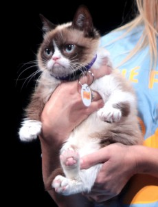 Grumpy_Cat_by_Gage_Skidmore